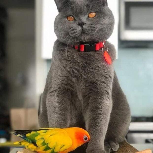 Неслыханно: птица ездит верхом на кошке