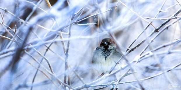 В «Перспективе» прошел конкурс зимней фотографии