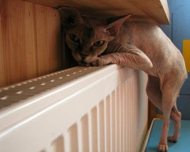Мерзлявые коты коты, тепло, фото