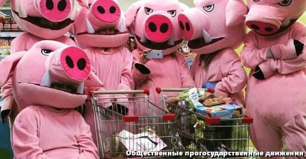 Свиньи за работой. Отрабатывают гранты.