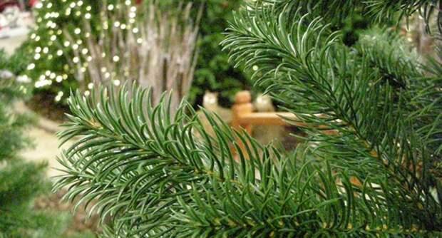 Как выбрать искусственную елку? Их виды, цены, плюсы и минусы