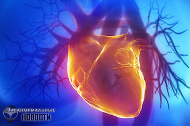 Душа в почках: Мистические случаи при пересадке органов одного человека другому