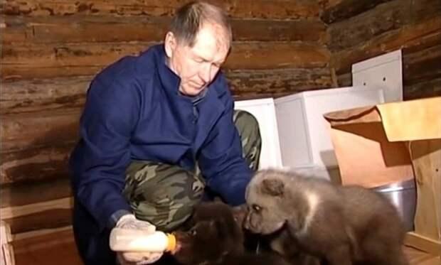 Биолог Валентин Пажетнов организовал уникальную станцию по возвращению в дикую природу осиротевших медвежат