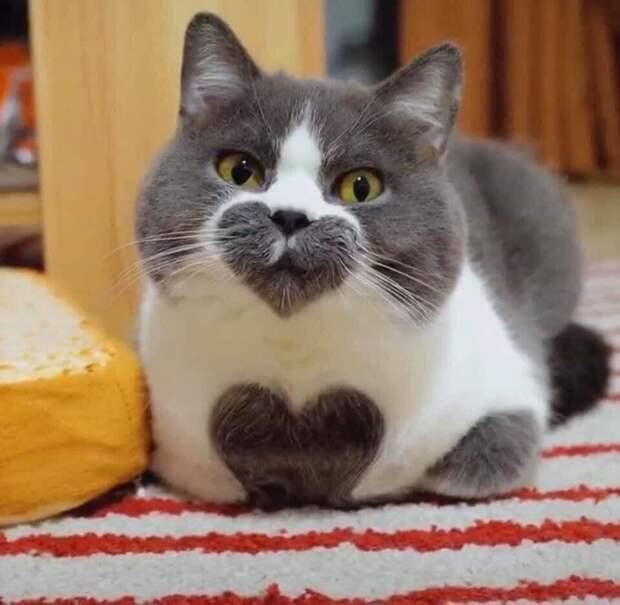 Милый котик, которого я узнаю из тысячи