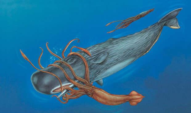 кашалот, кит, кальмар