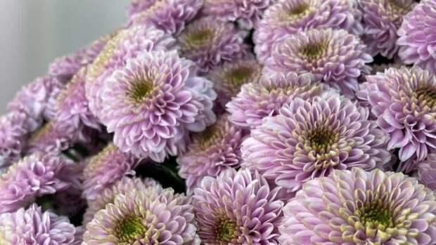 Молодая продавщица унизила бедного дедушку, который хотел купить цветы для жены. Она обомлела, когда узнала кому был этот букет.