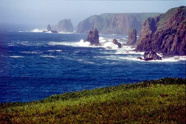 Токсичные водоросли могут сделать виноватыми в отравлении воды в океане на Камчатке