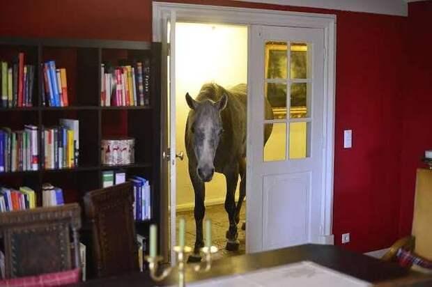 «Съела обед и украла морковь!» Лошадь проникла в чужой дом и повела себя по-хозяйски