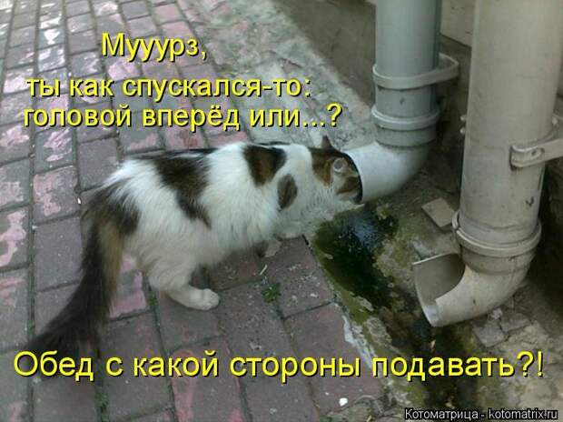 1474017275_kotomatricy-16