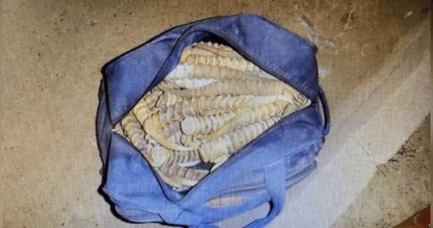 Более 200 рогов сайги нашли в багажнике легковушки в Уральске