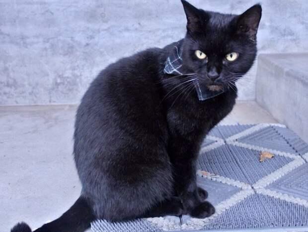 Оба они — бродячие коты, которые живут недалеко от музея животные, кот, кошки, милота, музей, япония