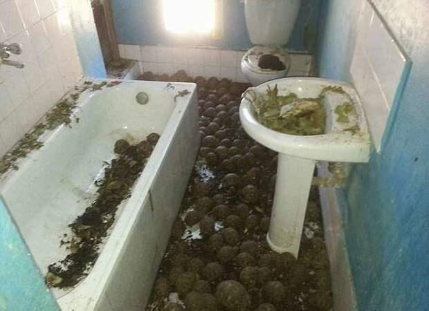 Запах от этого дома был слышен за версту! Оказалось, там заперты 10 000 черепах…