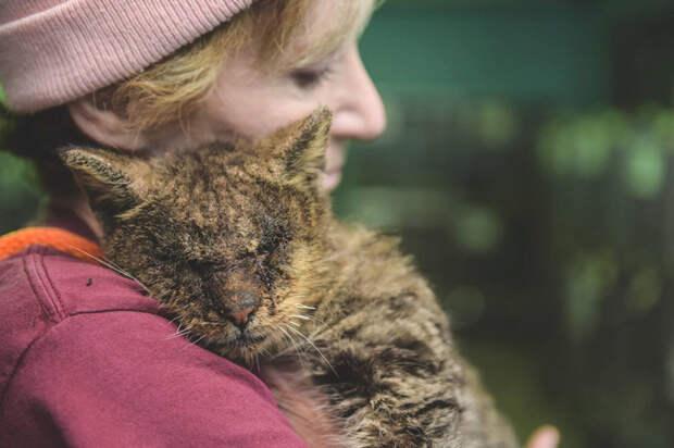 Женщина взяла на руки кота, к которому другие боялись даже подходить добро, животные, кот
