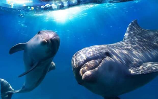 Пророчества фантастов о дельфинах оказались удивительной реальностью