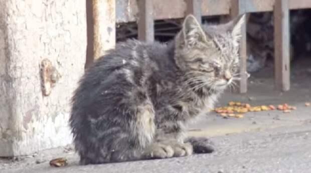 Испуганный бездомный котёнок топтался лапками по одеялу: он был слепым и не знал, куда его везут
