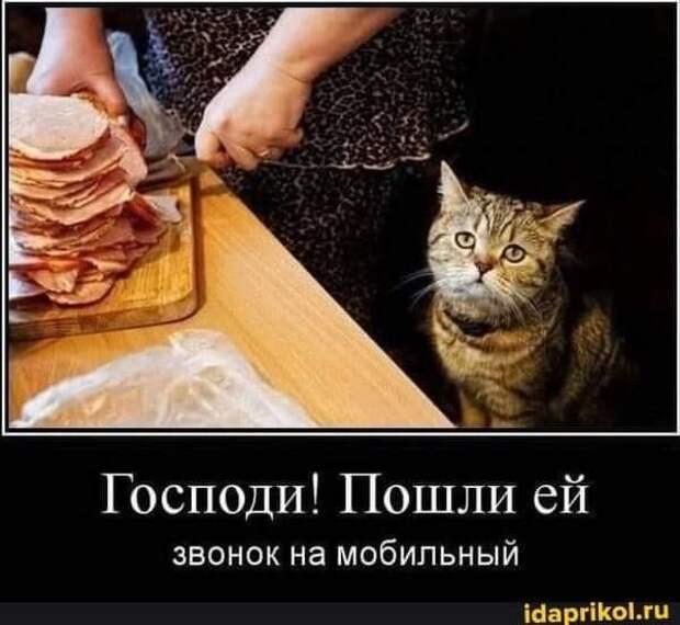 Возможно, это изображение (текст «господи! пошли ей звонок на мобильный idaprikol.ru»)