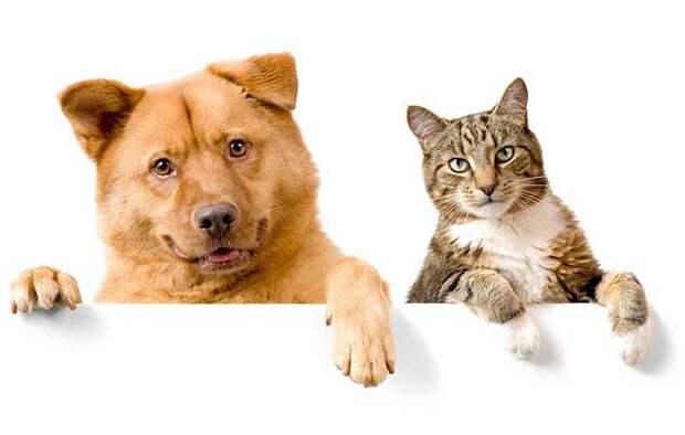 Кошка и собака в одном доме: как подружить кошку с собакой | Зоомагазин  низких цен ЛавПетс