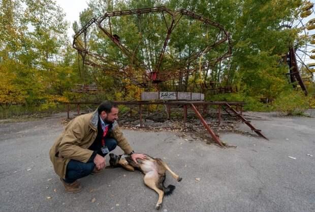 Лучи доброты: ученый из США пожертвовал карьерой ради спасения брошенных собак в Чернобыле