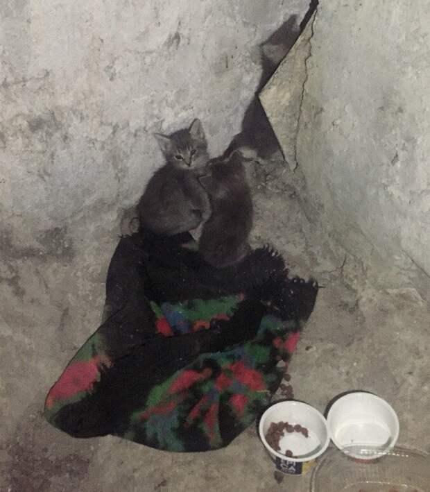Просим помощи для крошечных котят