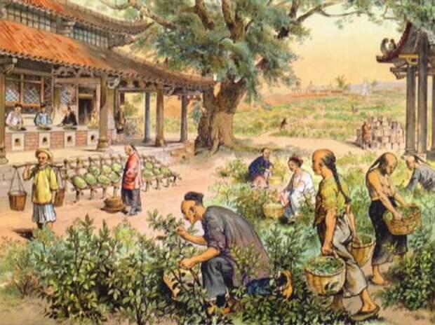 История традиции чаепития на Руси