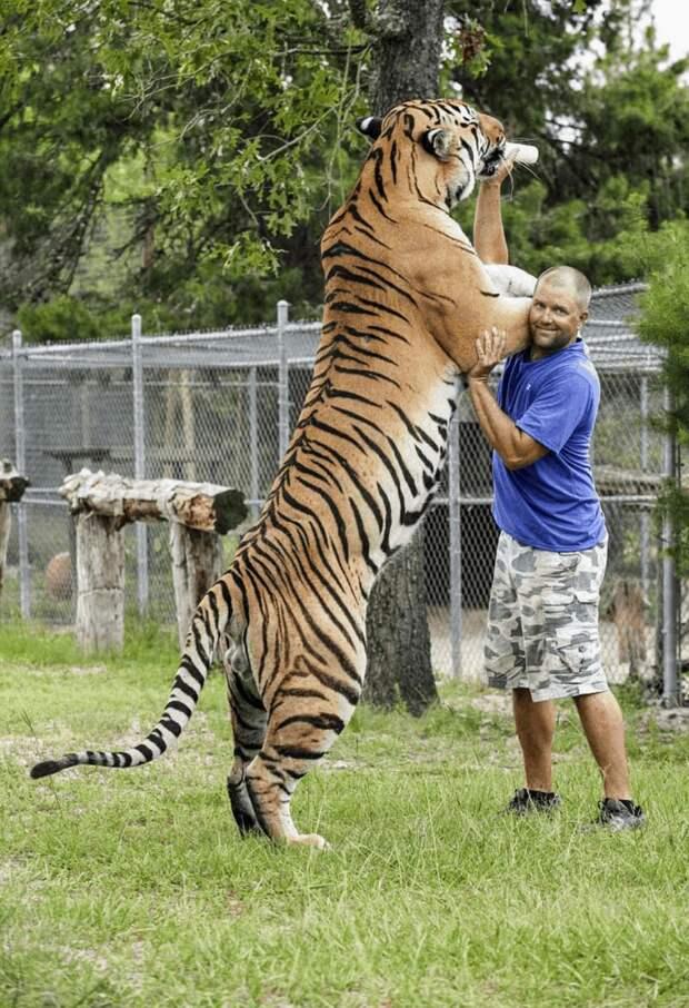 Реальный размер животных на этих 18 снимках, заметны только в сравнении с другими предметами