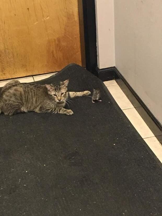 Чтобы избавиться от мыши, парень завел кота, но что-то пошло не так