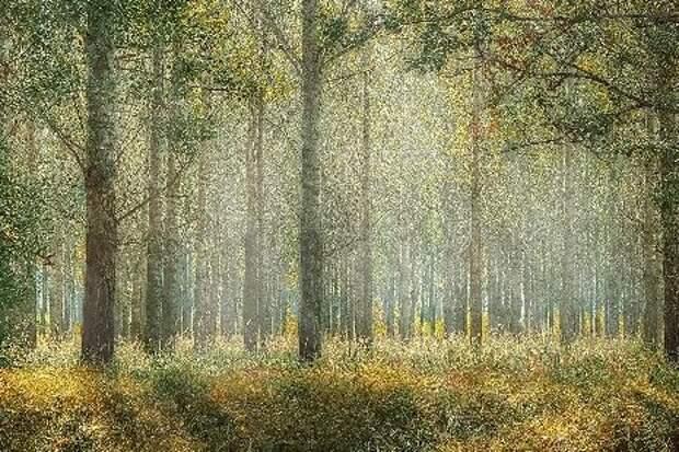 В Тамбове появилось больше 200 гектаров молодого леса