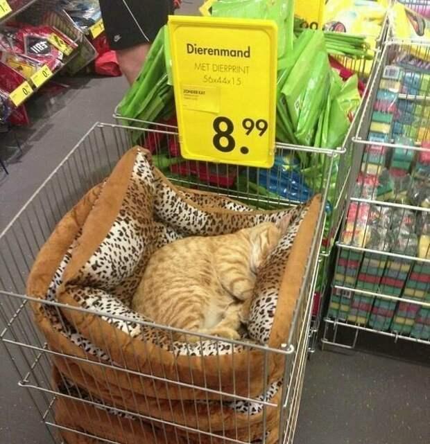Кот прилагается ikea, магазин, мебель, подборка, прикол, ретейл, юмор
