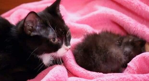 Котенок плакал и искал кого-то, кто станет ему мамой — но никто не захотел иметь с ним дело