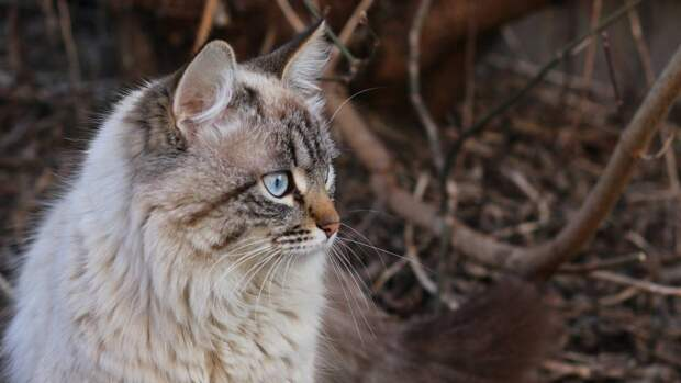 В поселке Локоть пожарные спасли забравшегося на верхушку дерева кота