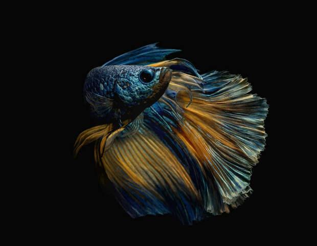 Лучшие фотографии природы фотоконкурса Siena International Photography Awards 2016 26