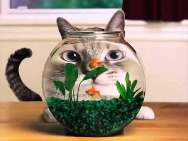 Прикольные котики, смешные коты - YouTube