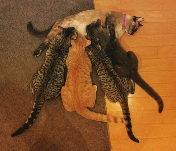 Известная проблема «отцы и дети» в исполнении животных