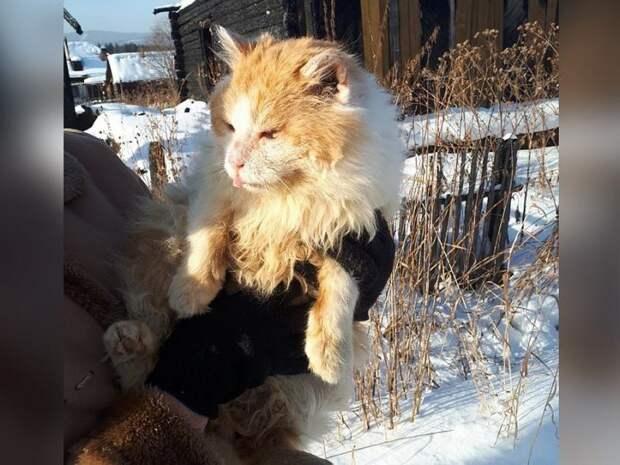 «Верный, как Хатико»: кот Рыжик полтора года жил в сгоревшем доме и ждал хозяев