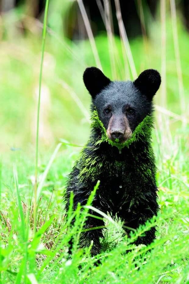 Двух брошенных в коробке малышей сперва приняли за щенков, но это были крошечные медвежата