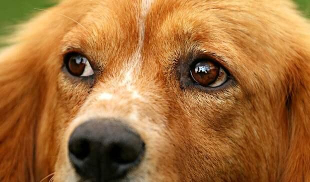 Вмае почти 50 бездомных животных отловили вРостове-на-Дону