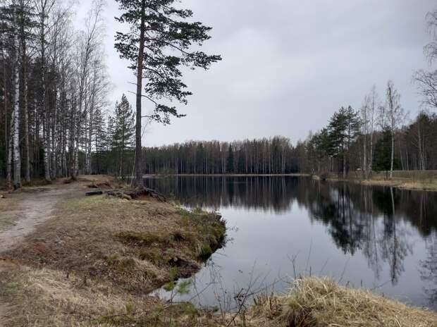 Станция Ириновка. Усадьба барона Корфа, старинный дуб, тайная экотропа и лесное озеро