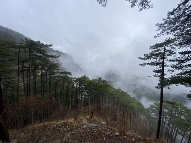Ялтинский горно-лесной заповедник за майские праздники посетили более 3 тысяч человек