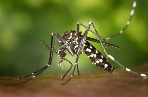 Власти Таиланда объявили эпидемию лихорадки денге