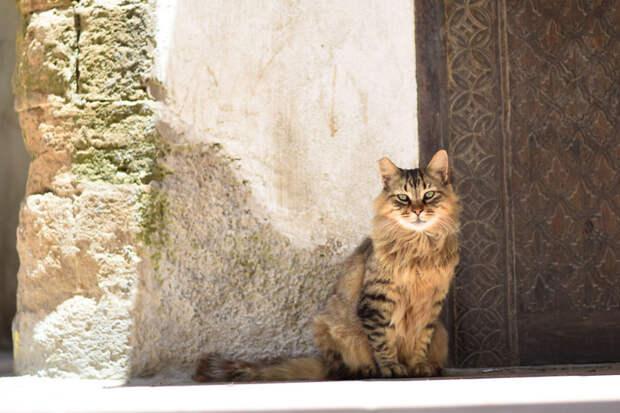Пушистик Эс-Сувейра, город, животные, кот, марокко, проект, фотограф