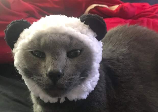 Сестра не захотела видеть брата на свадьбе из-за кота
