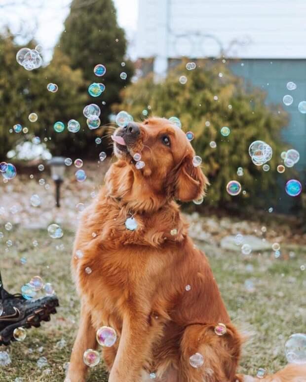"""25 умилительных фото собак, которые заслужили звание """"хороший мальчик"""" пес, собака, хороший мальчик"""