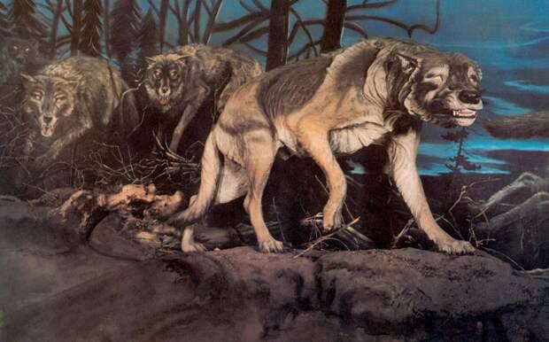 Ученые расшифровали ДНК ужасных волков, вымерших 13 тысяч лет назад
