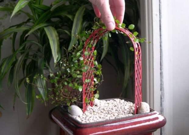 мини-арка для растений