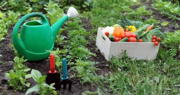 Расписание и состав подкормок овощей – памятка огородника