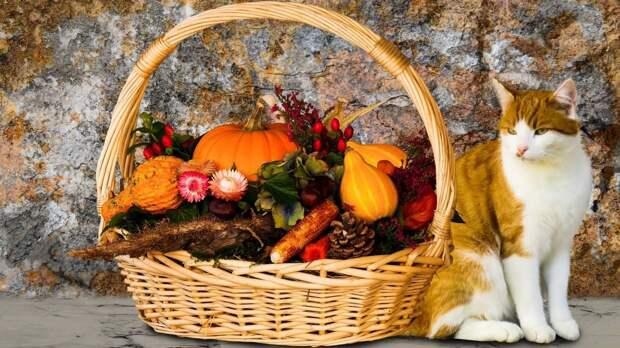 Иммунолог Слизова перечислила продукты для поддержания иммунитета осенью