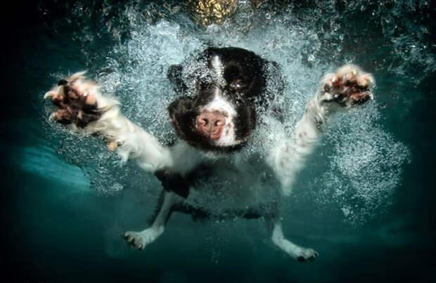 Собаки под водой («Science-Photo»)