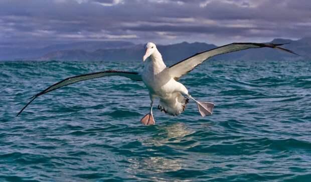 Странствующий альбатрос: Кругосветка за месяц. Как не уставать при регулярных перелётах на 21.000 км?