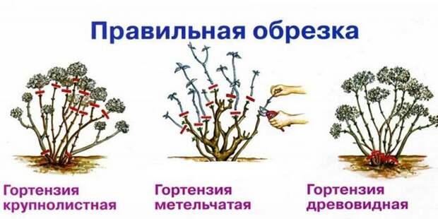 4920201_Obrezka (700x351, 90Kb)
