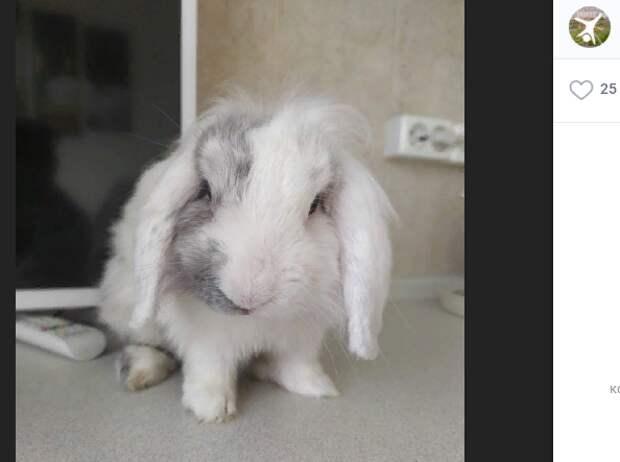 Белый кролик с Перервы сбежал от бабушки
